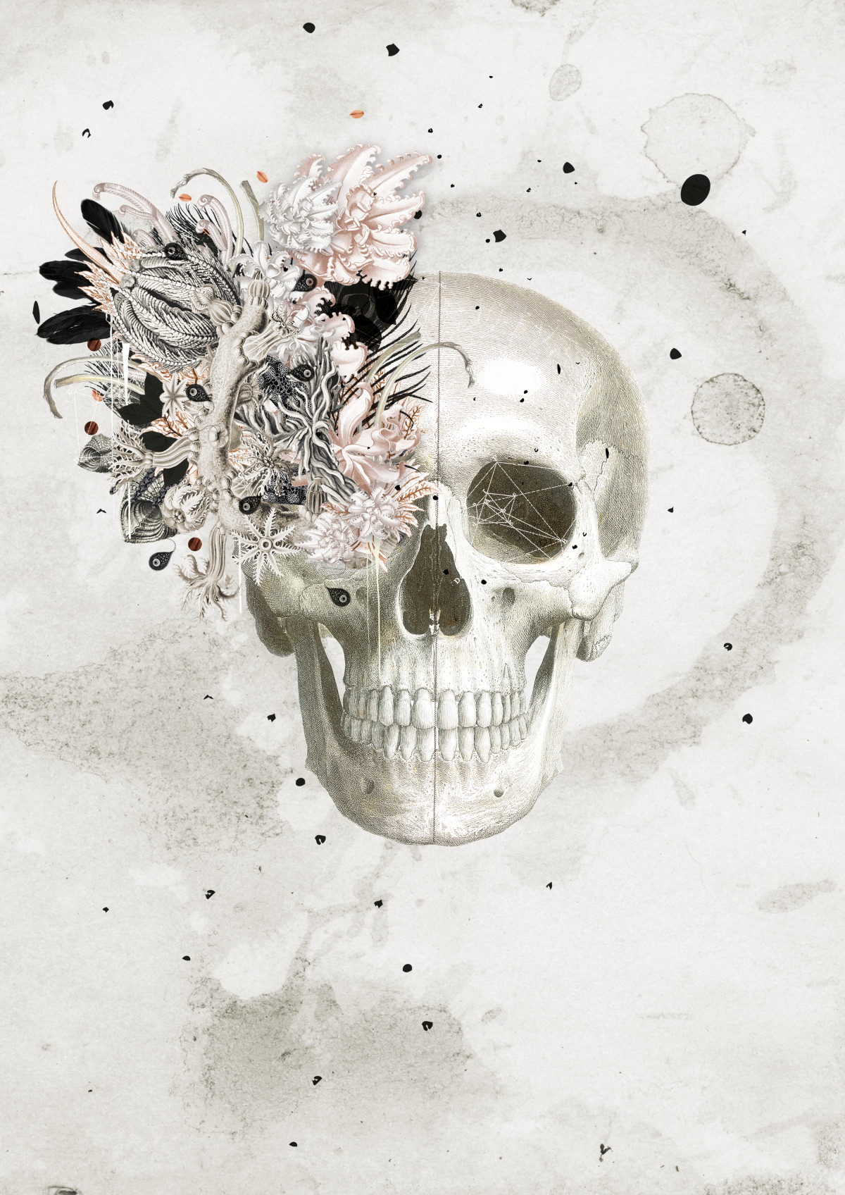 coralleskull