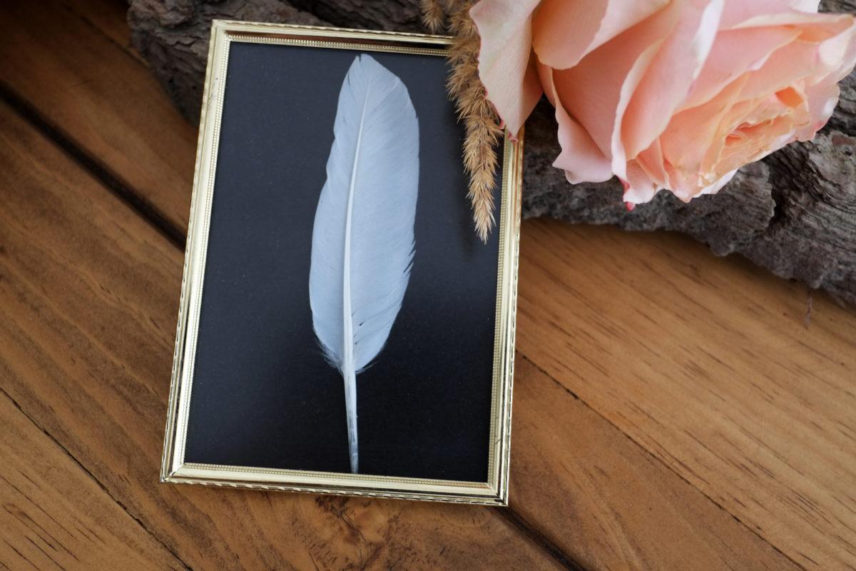 nita_found_feather_01